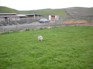 Tassajara Kennel Facilities
